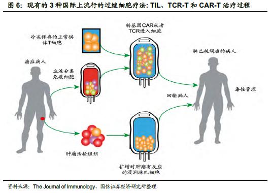 梨果核石细胞结构图